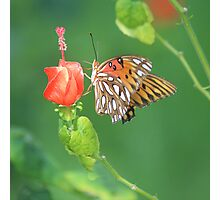 Butterfly Landing Photographic Print
