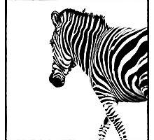 Zebra by Wendi Donaldson