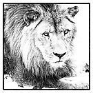 The King by Wendi Donaldson