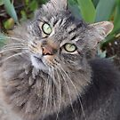 Cat I Don't Own  1.3 by seeya