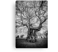 Huge Tree Canvas Print