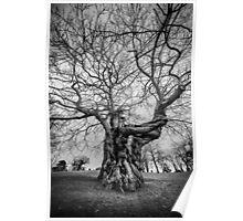 Huge Tree Poster