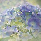 moody blue by Teresa Pople
