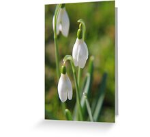 Gotas de nieve Greeting Card