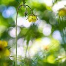 A Little Woodland Magic by Sarah-fiona Helme