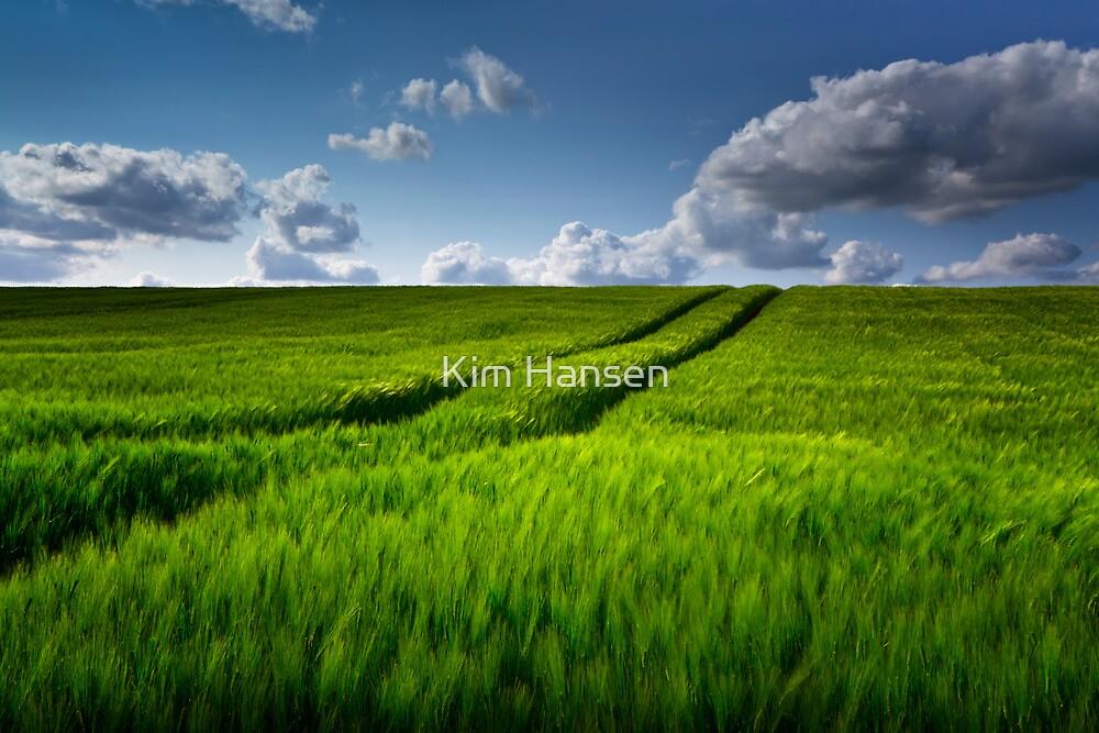 Green Field of Barley by Kim Hansen