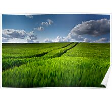 Green Field of Barley Poster