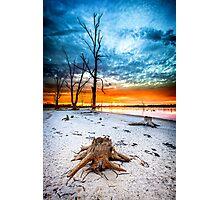 Stump at Kings Billabong Photographic Print