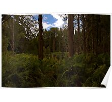 Swamp through the Eucalypts Poster