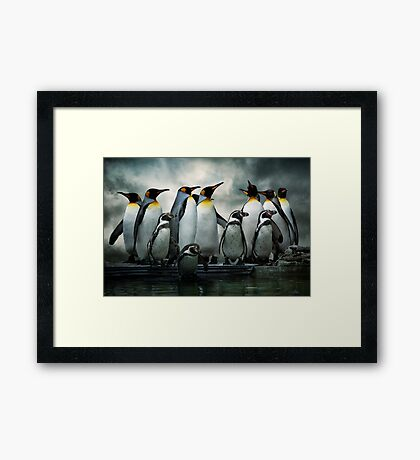 Penguins at Bourton Framed Print