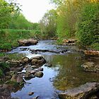 Creek by Debbie Oppermann