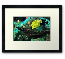 YELLOW FISH Framed Print