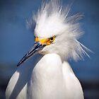 Snowy Egret by venny