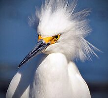 Snowy Egret by Savannah Gibbs