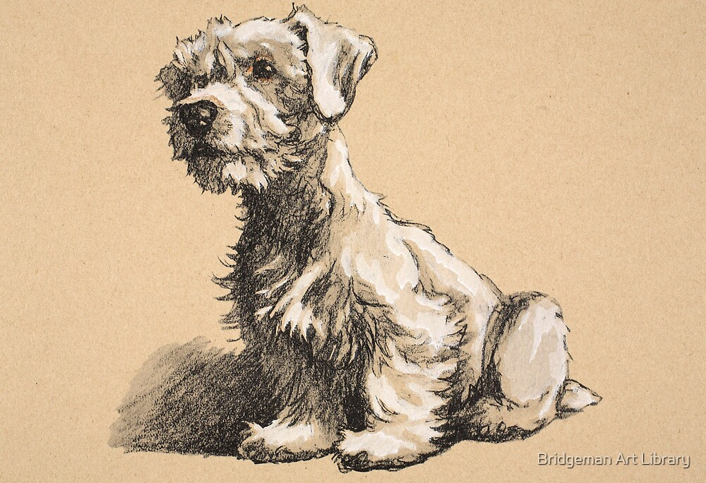Sealyham, 1930, Illustrations from his Sketch Book used for 'Just Among Friends', Aldin, Cecil Charles Windsor (1870-1935), later Published by Eyre and Spottiswoode Limited, 1934 by Bridgeman Art Library