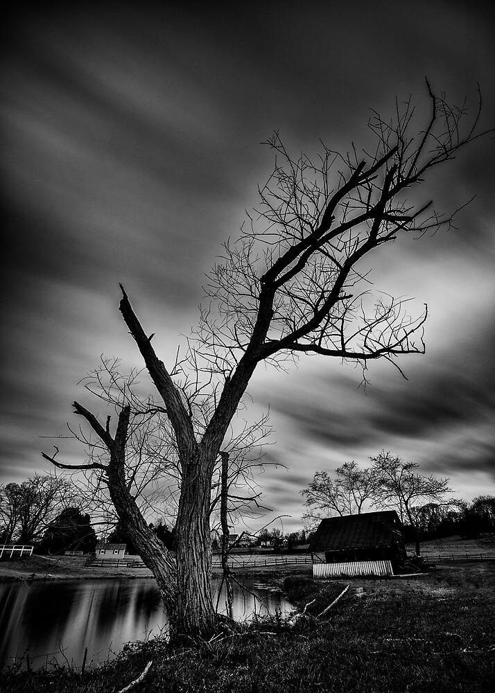 Pond And Tree by Arkadiy Chernov