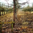 1982 orchard ? by Gregoria  Gregoriou Crowe