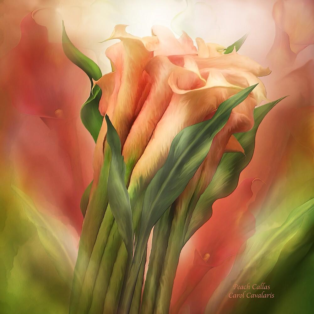Peach Callas by Carol  Cavalaris