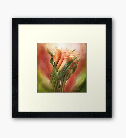 Peach Callas Framed Print