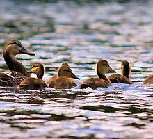 Follow the Leader by PrecisionImages