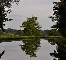Tree Mirror Image 2 by Robbie Patterson
