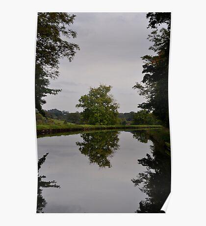 Tree Mirror Image 2 Poster