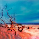 Pink Sands Blue Sky - Outer Banks I by Dan Carmichael