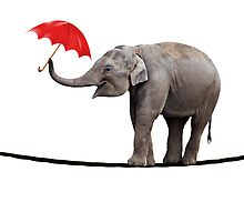 Elephant on a tightrope by Norma Cornes