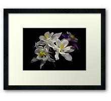 Petals... Framed Print