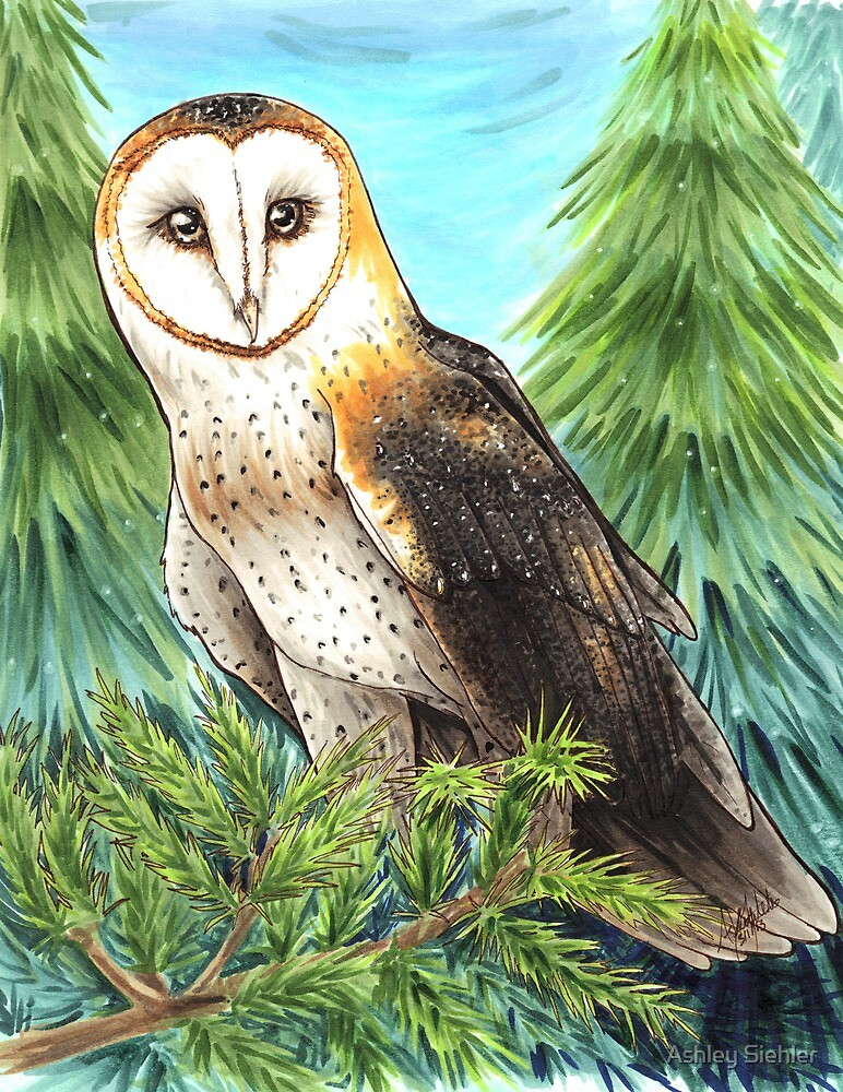 Barn Owl in the Woods by WeileAsh