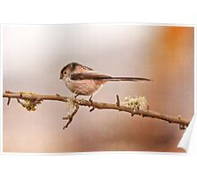 Long- tailed tit Poster