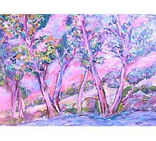 Lavender Sunset Photographic Print
