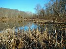 Perkiomen Creek Green Lane Recreational Area - Pennsylvania by MotherNature