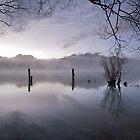 Old Jetty Remains, Kinloch NZ by Odille Esmonde-Morgan