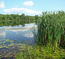 Green Lane Open Space Recreation Area - Pennsylvania by MotherNature