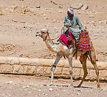 Camel Taxi. by bulljup