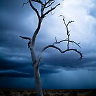 Dark lone tree by outbacksnaps