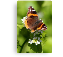 Red Admiral Butterfly Portrait Canvas Print