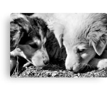 Afghanistan B&W Collection: HORBW0008 Canvas Print