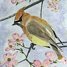 A Waxwing in the Dogwood by AngieDavies