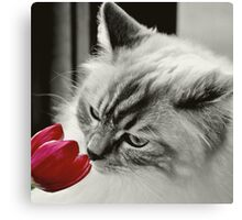 Taking the Time.... Canvas Print