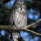 Wooden Light / Great Grey Owl by Gary Fairhead