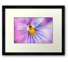 Party Time Pansy Framed Print
