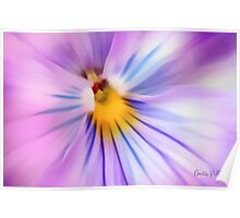 Party Time Pansy Poster