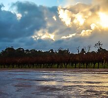 Rainy Vineyard by John Patterson