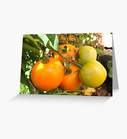 Mellow Yellow...Tomatoes kissed by the Sun Greeting Card