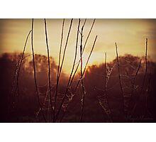Sunrise through the web Photographic Print