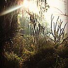 Sun peering through the weeping willow by megamonroe