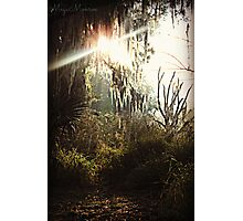 Sun peering through the weeping willow Photographic Print