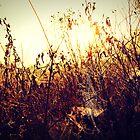 Sunrise by megamonroe